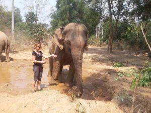 Elephant Haven Thailand Kanchanaburi