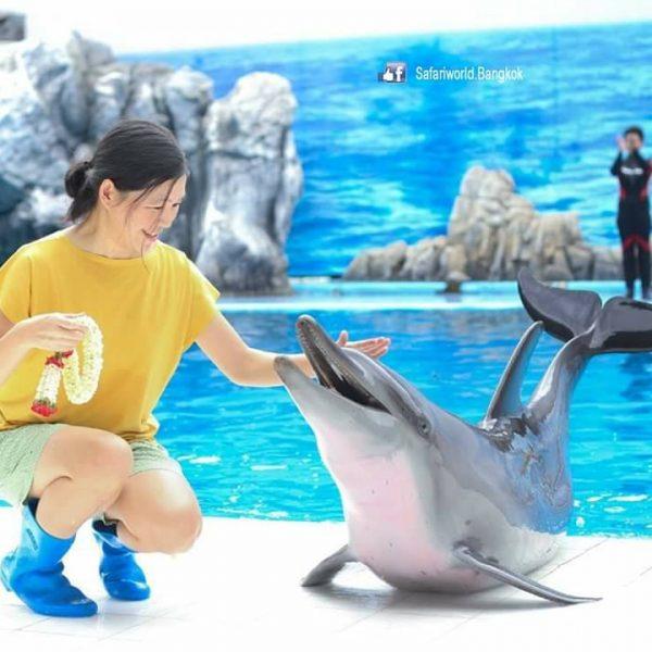DolphinShow